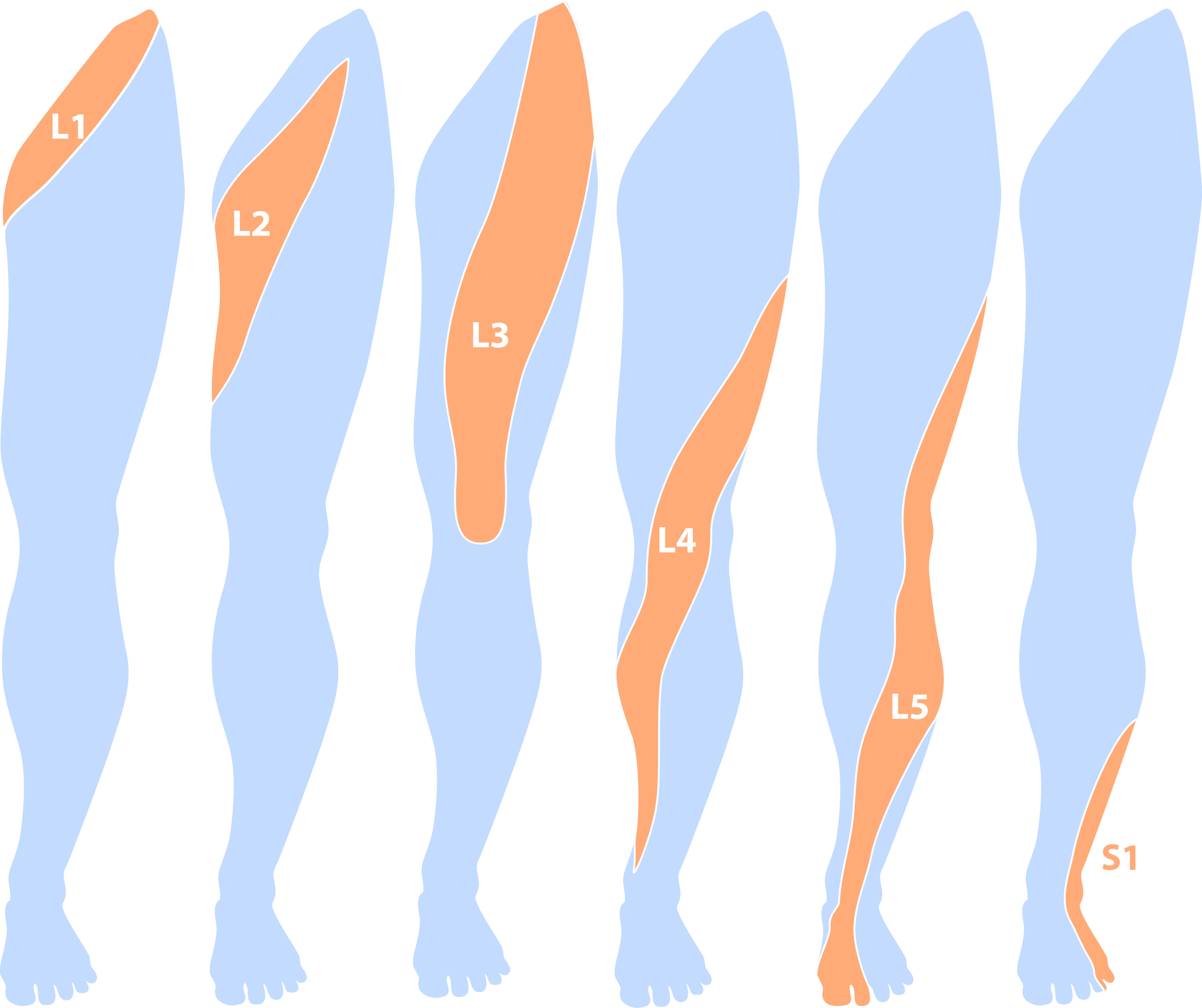 Dermatomes april 2014 angel syrett dermatome l1 pooptronica